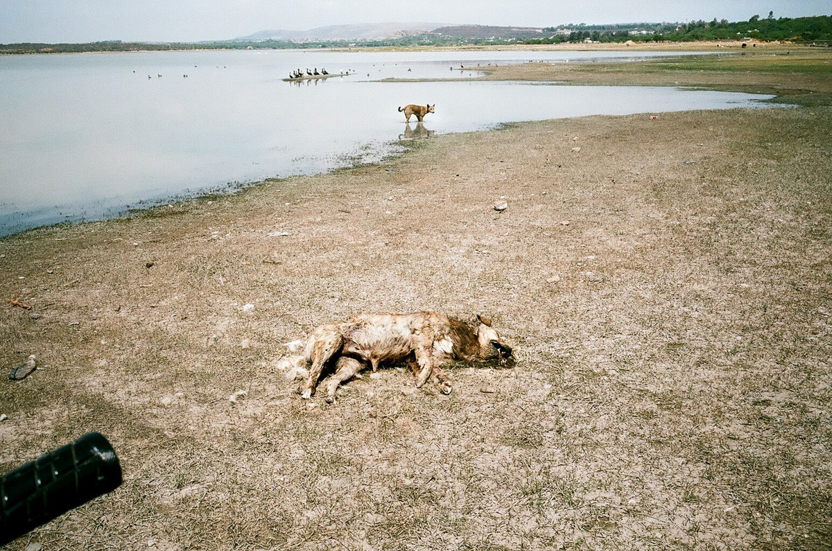 Dead and living dogs, San Miguel, 2011