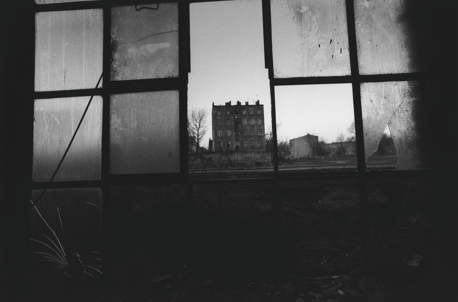 David Lynch, Untitled (Lodz), 20