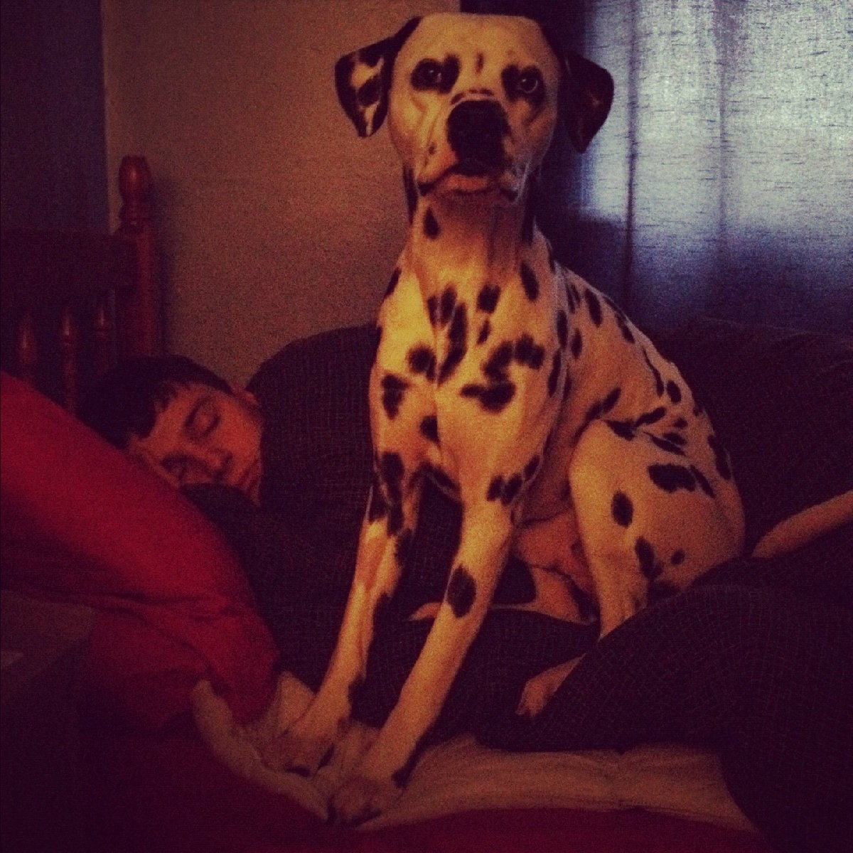 my brother and Jasper on the bed