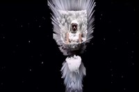 McQueen Nick Knight still SHOWstudio