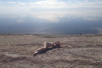 Audrey Wollen The Birth of Venus at the Salton Sea