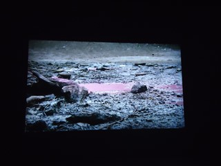 2 Pierre Huyghe
