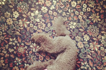 CoCo on the carpet