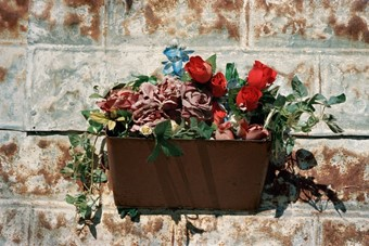 Flower Bucket, Austin, Texas