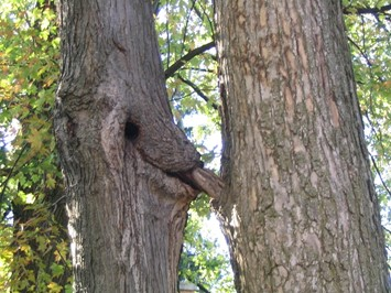 Oral_sex_tree_by_Nakeshka