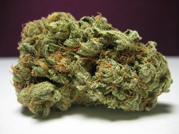 Super skunk marijuana cannabis bud