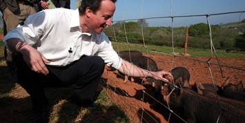 David Cameron with pigs