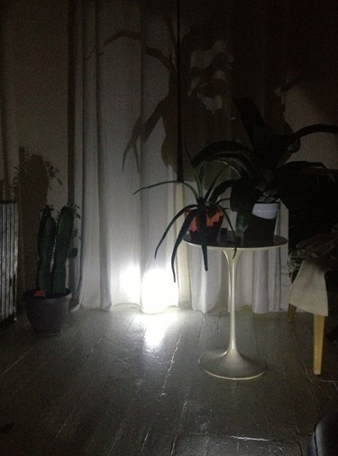 Cameron Mesirow's apartment during the blackout, s