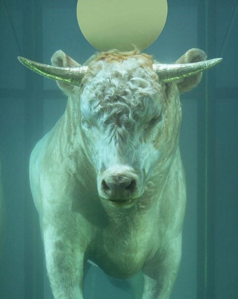What we've learned since Damien Hirst took control of his own Instagram