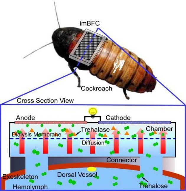 Self-powered cockroach