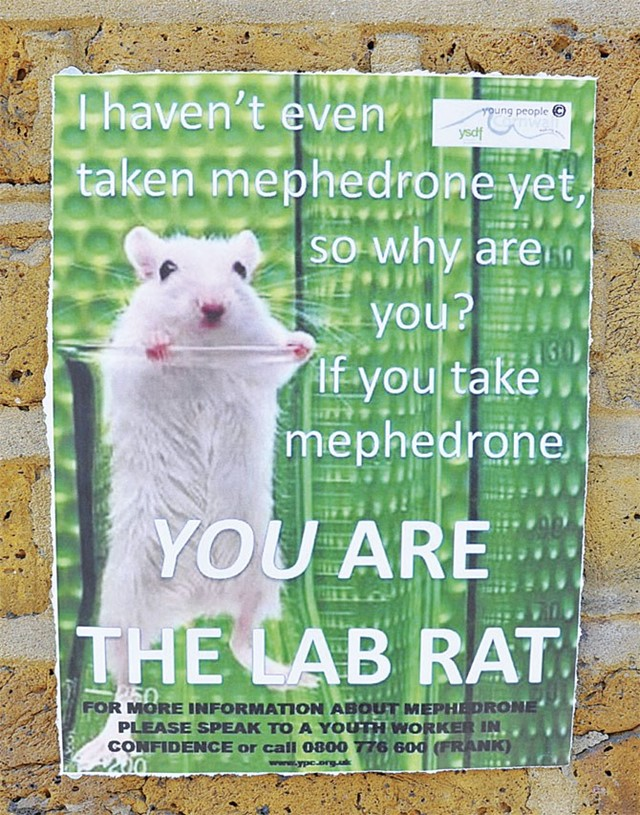 lab-rat-on-mephedrone