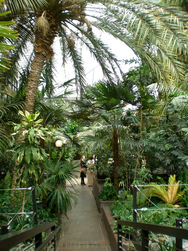 Inside the Barbican Conservatory