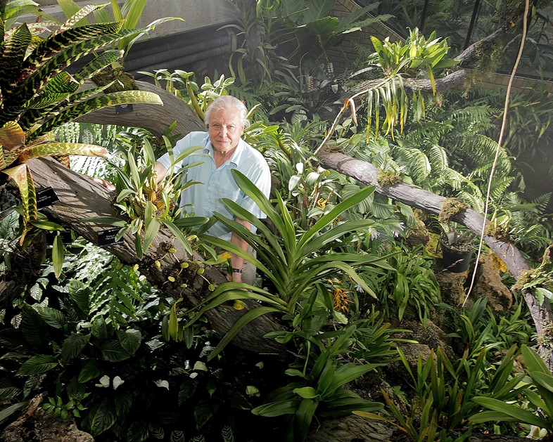 Attenborough-at-Kew-MAIN-PIC-copy1
