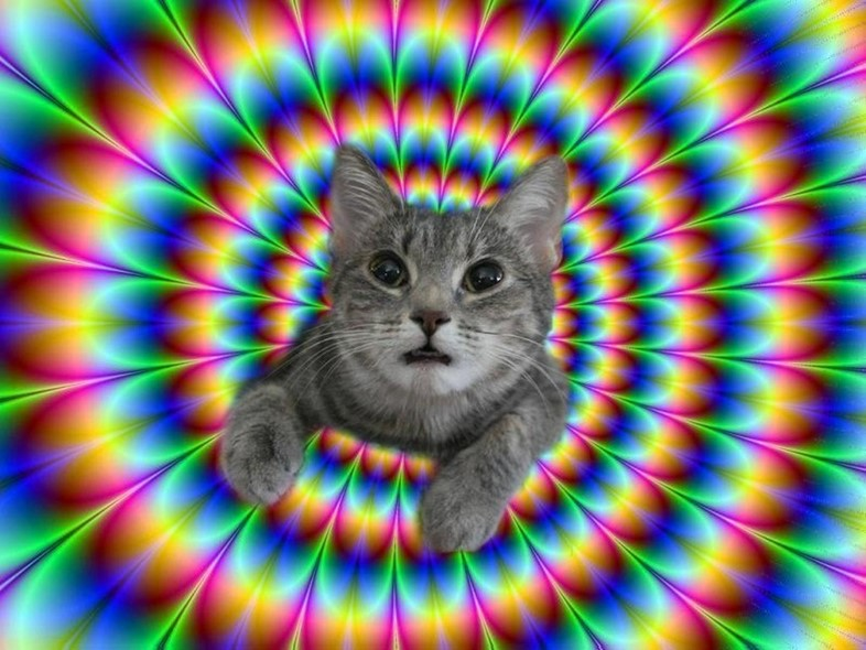 tripping-cats