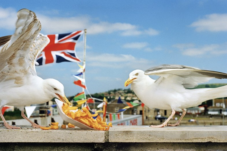 Feast for the Eyes, Martin Parr