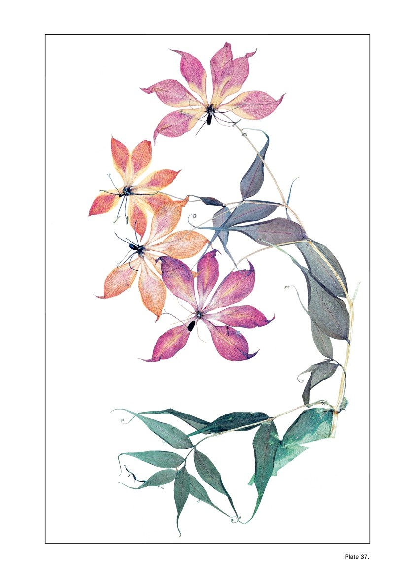 Plate 37: NICK KNIGHT Flora Edition, 1997 - 2010 G